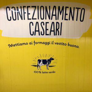 In Sardegna ad Arborea vivono le mucche felici